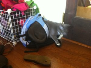 Our cat is back to school ready!