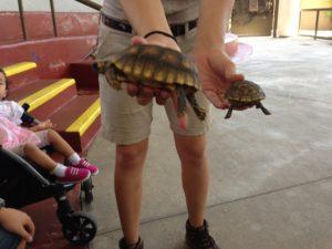 Jungle Island Turtle